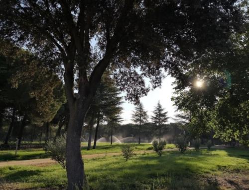 Blog Campamento Naturaleza y Aventura